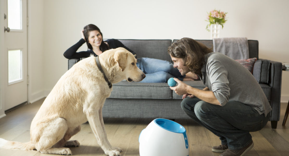 Dog Life After Coronavirus Lockdown