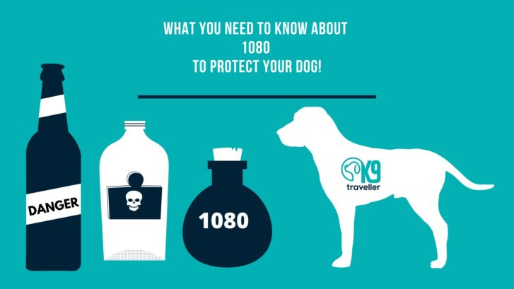 What You Need To Know About 1080 To Protect Your Dog