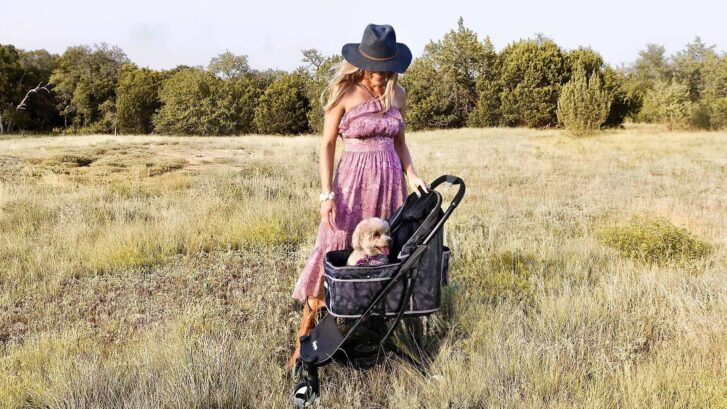 5 Best Dog Strollers & Carriers of 2020