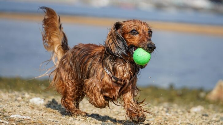 7 Tips To Keep Your Dog Safe This Summer in Australia