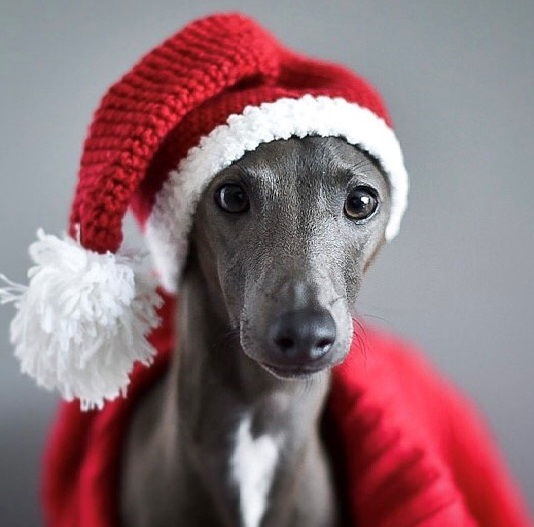 9 best gifts for dogs